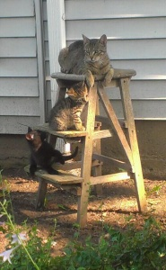 Kitten fun! They have been on the porch and just introduced to the outside. Mama was watching over them as they romped around. Delightful!