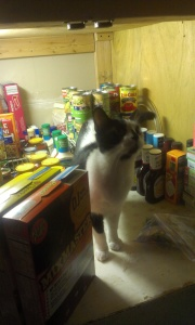 After grocery shopping, Moo cheered me on as I packed the pantry. Curiosity!